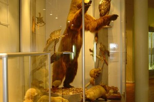 Музей природы. Каркасная витрина.